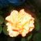 Kerti virágok 1