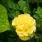 Kerti virágok 3