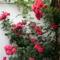 Kerti virágok 4