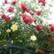 Kerti virágok 5