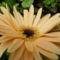 Kerti virágok 7