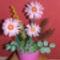első virágkompozícióm
