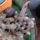 Kaktuszom-001_801400_41116_t