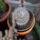 Kaktuszom-004_801403_28112_t