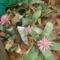kert  broméliém