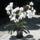 Orhidea_csoda_801377_24637_t