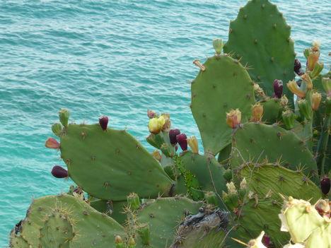 Tenger és kaktuszok