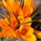 Jani növényei-gyümölcsei (10)