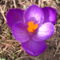 Jani növényei-gyümölcsei (12)