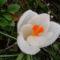 Jani növényei-gyümölcsei (17)