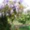 Jani növényei-gyümölcsei (1)
