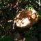 Jani növényei-gyümölcsei (20)