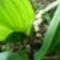 Jani növényei-gyümölcsei (21)