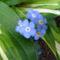Jani növényei-gyümölcsei (24)