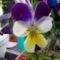Jani növényei-gyümölcsei (25)