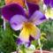 Jani növényei-gyümölcsei (26)