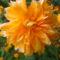 Jani növényei-gyümölcsei (27)
