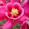 Jani növényei-gyümölcsei (29)