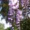 Jani növényei-gyümölcsei (2)