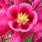 Jani növényei-gyümölcsei (30)