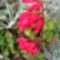Jani növényei-gyümölcsei (33)