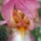 Jani növényei-gyümölcsei (35)