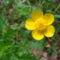 Jani növényei-gyümölcsei (3)