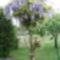Jani növényei-gyümölcsei (41)