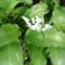 Jani növényei-gyümölcsei (45)