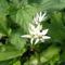 Jani növényei-gyümölcsei (46)