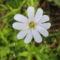 Jani növényei-gyümölcsei (47)