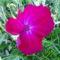 Jani növényei-gyümölcsei (50)