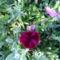 Jani növényei-gyümölcsei (52)