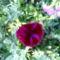 Jani növényei-gyümölcsei (53)