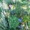 Jani növényei-gyümölcsei (55)