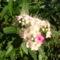 Jani növényei-gyümölcsei (57)