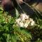 Jani növényei-gyümölcsei (58)