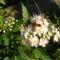 Jani növényei-gyümölcsei (59)