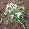 Jani növényei-gyümölcsei (5)