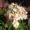 Jani növényei-gyümölcsei (60)
