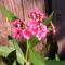 Jani növényei-gyümölcsei (61)