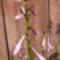 Jani növényei-gyümölcsei (62)