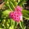 Jani növényei-gyümölcsei (64)