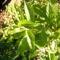 Jani növényei-gyümölcsei (65)