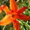 Jani növényei-gyümölcsei (66)