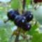Jani növényei-gyümölcsei (69)