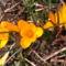 Jani növényei-gyümölcsei (6)