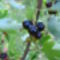 Jani növényei-gyümölcsei (70)