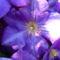 Jani növényei-gyümölcsei (78)