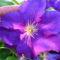 Jani növényei-gyümölcsei (79)